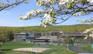 HCC Spring flowers